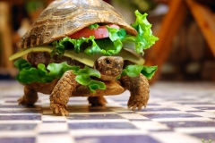 Fresh-Live-Turtle-Burger-Wallpaper-E-Entertainment